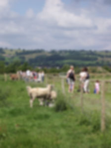 Sheep and lambs looking at families visiting St Augustines Farm