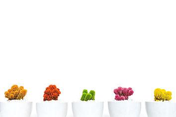 art-artistic-beautiful-bloom-311458_edit