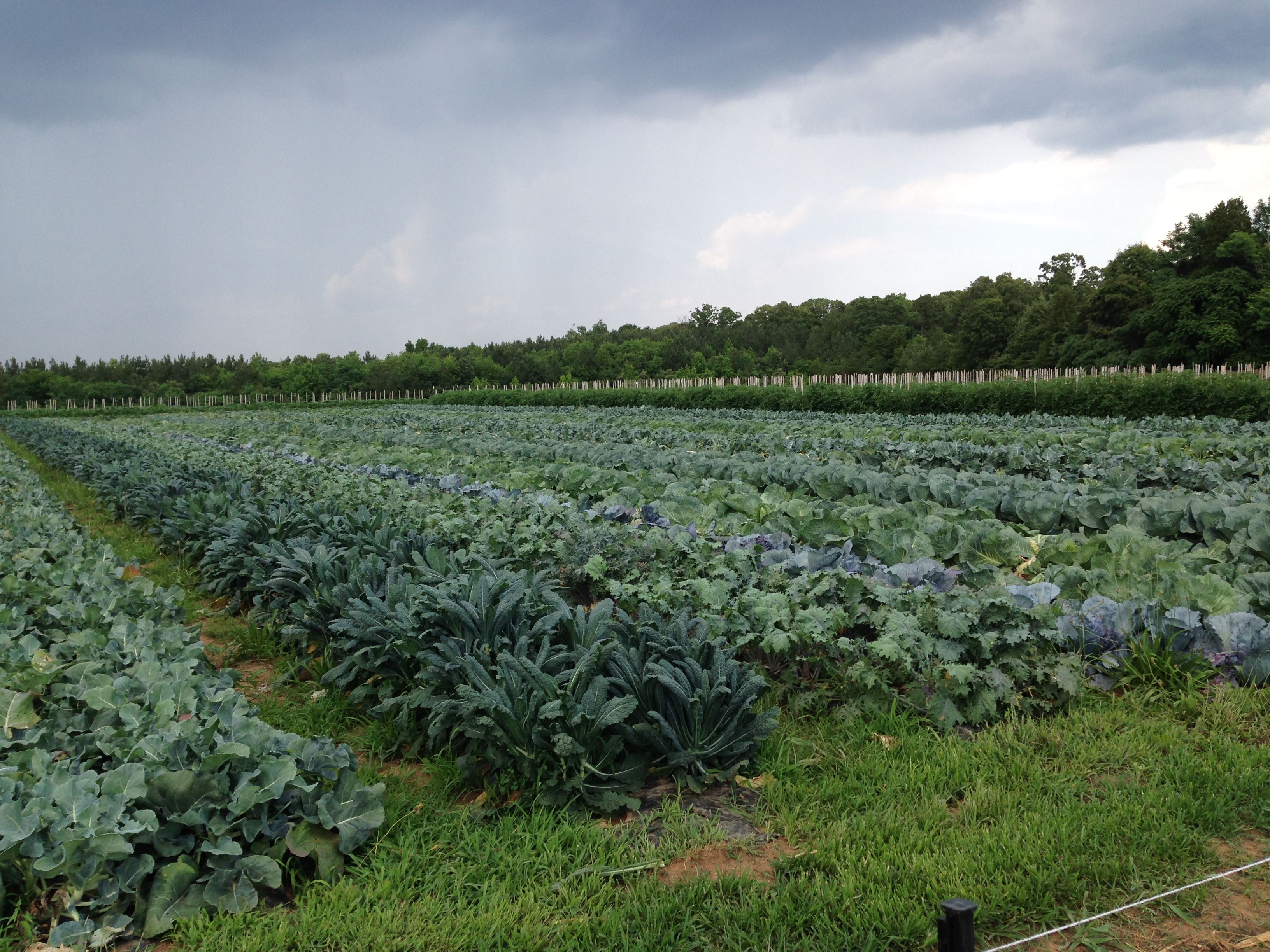 Shalom Farms, Virginia