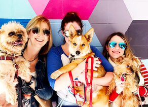 The Ultimate Dog Friendly Day in Dallas