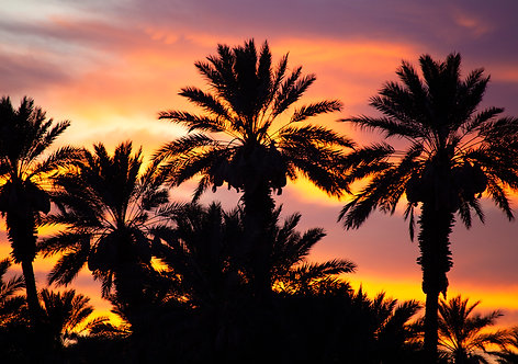 California Beautiful Palm Tree Sunset With Vivid Colors Photography Art Print