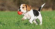 puppy image 3.jpg