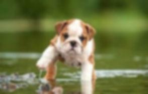 puppy image 2.jpg