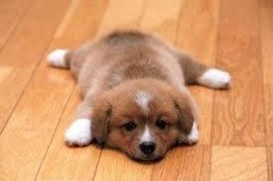 puppy image 1.jpg