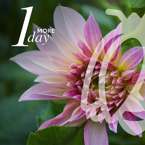 Jig-Bee-Social-Countdown-Slides-4-V2.jpg