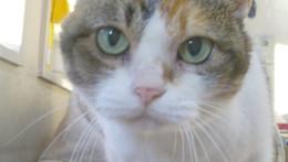 うちの猫です