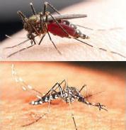 いつもそばにひそんでる…蚊