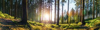 太陽と林.jpg