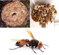 刺されたら危険…ハチ類