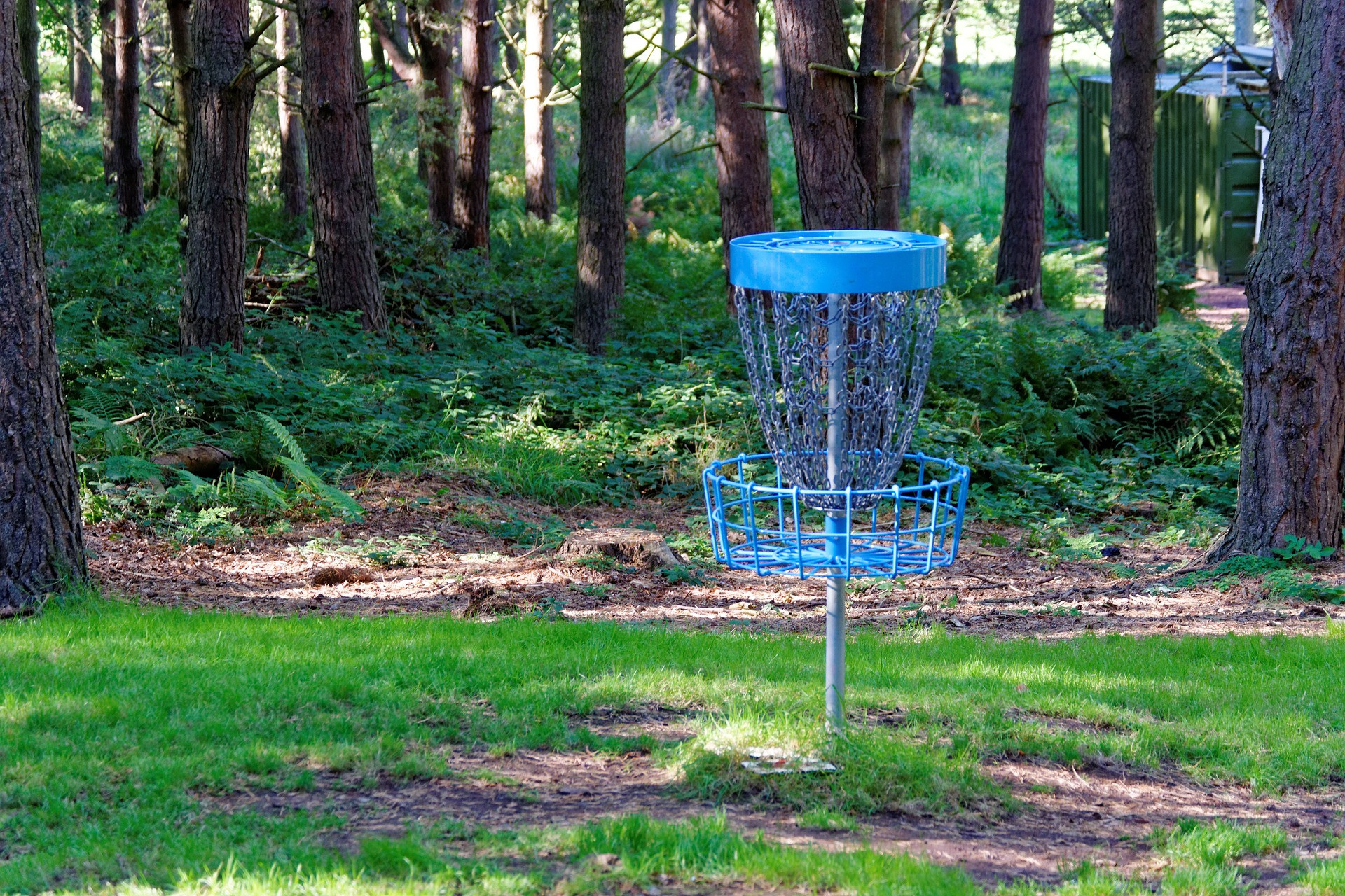 Personal Training for Disc Golf - Online