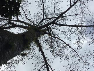 Partition 6 : les arbres et les totems