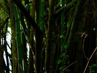 Partition 5 : christique des bambous