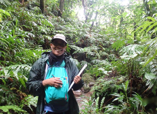herbier : Polymorphis Coloris Almae
