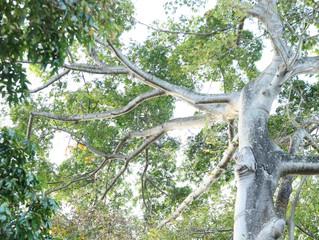 7 fois autour de l'arbre de l'oubli, je dépose...