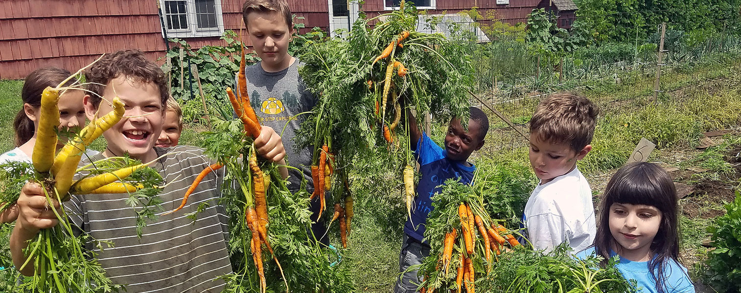 carrot_harvest_LOW