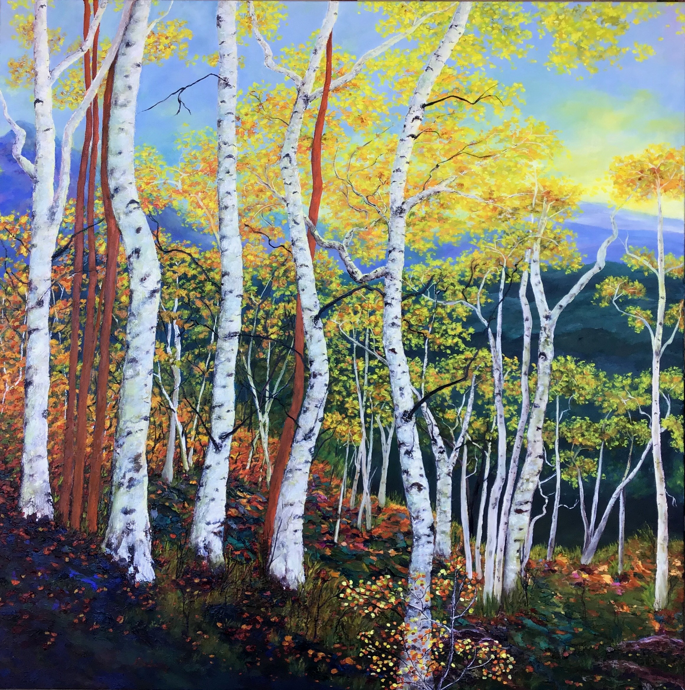 Birches at Sunrise