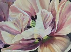 Monet's Tulip