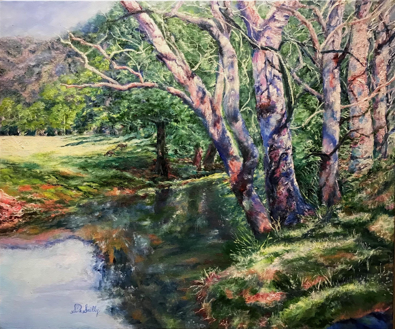 Kangaroo Valley Reflections
