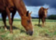 Pferdefutter, staubfrei, gesund, beste Qualität