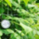 Himbeeren mit kalte Lust.jpg