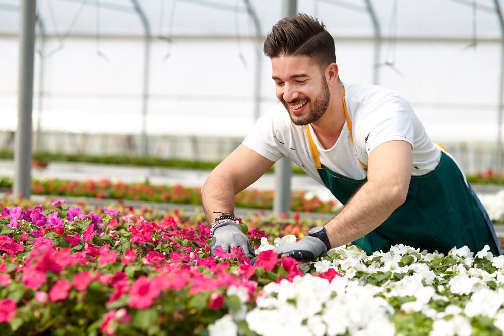 Man gardening beautiful flowers.
