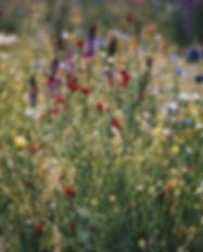 beautiful-bloom-blooming-712876.jpg