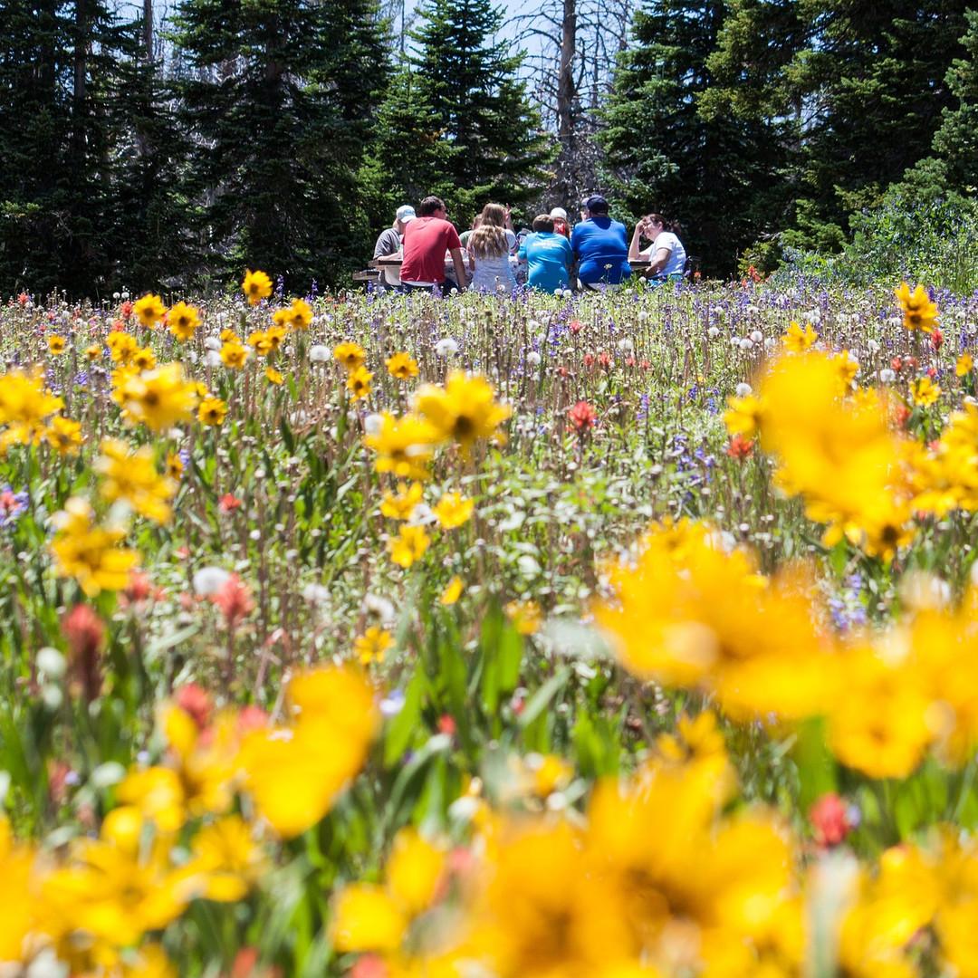 flower-meadow-1143739_1920.jpg