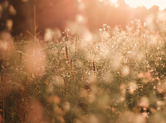 selective-focus-photo-of-wildflowers-258