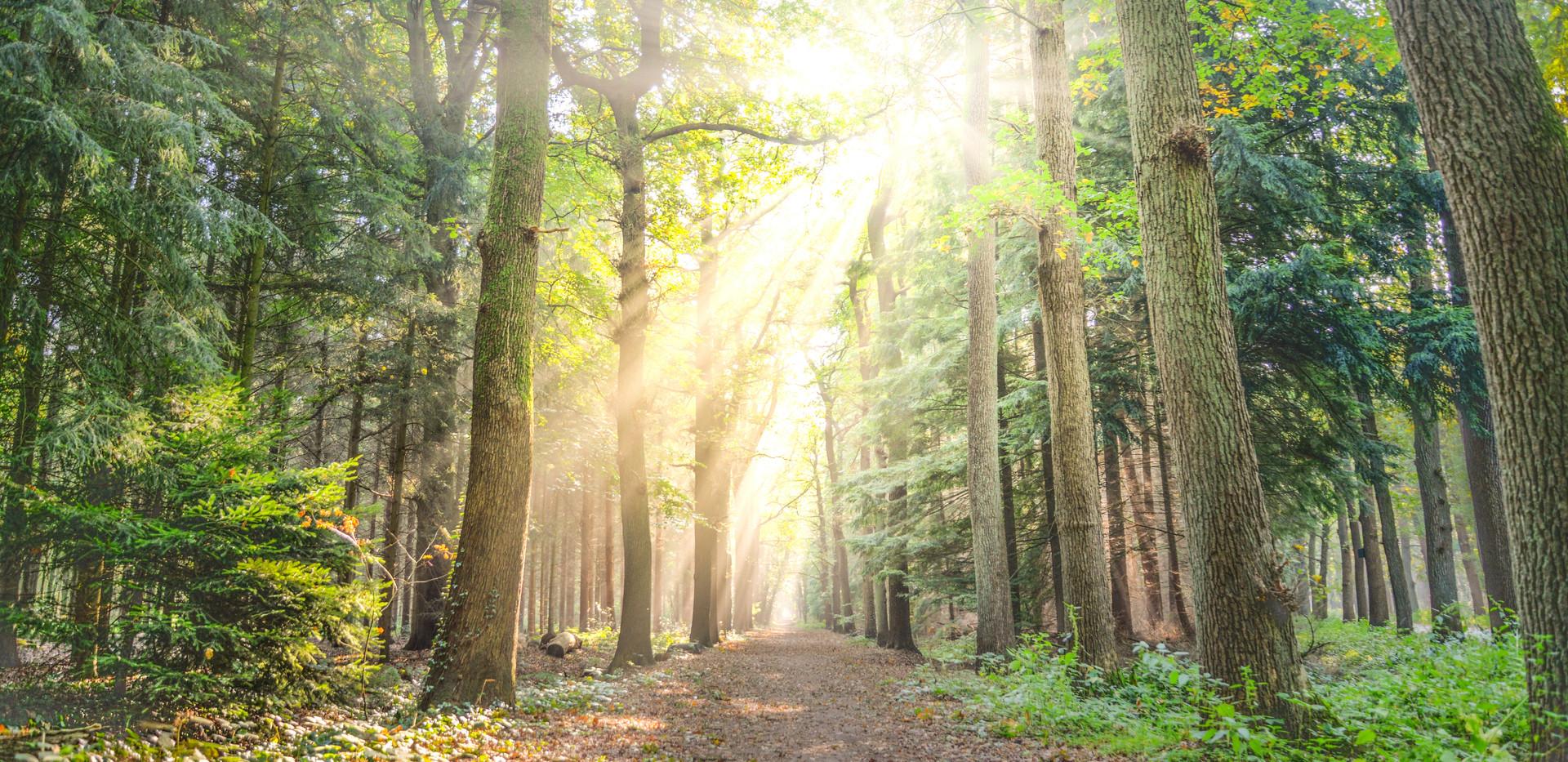 landscape-photo-of-pathway-between-green