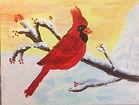 Daniel's Cardinal.jpg