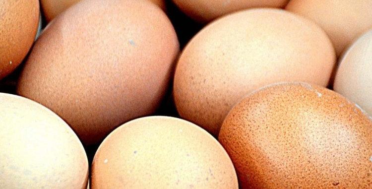 uova allevate a terra 72 pezzi