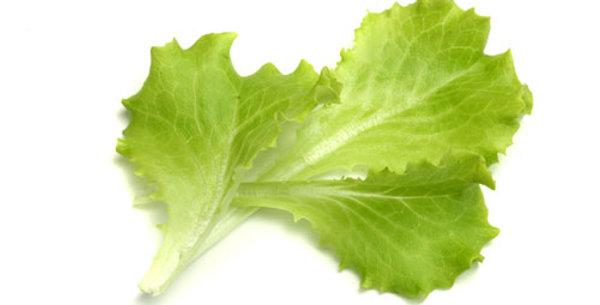 insalata verde in busta gr 100