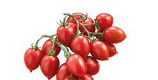 pomodoro PICCADILLY 500 gr