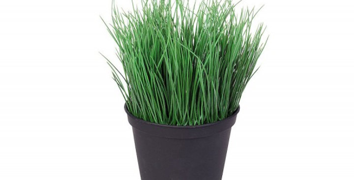 piantina di erba cipollina