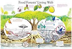 A community of organisms