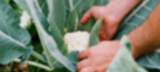 Dein Garten - Hochbeet Timberra - Noocity Growbed - Home Farming Solutions - Balkon- und Terrassengestaltung - Stadtgarten - Urban Gardening