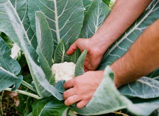 La transformación de la Horticultura: Agricultura agroecológica