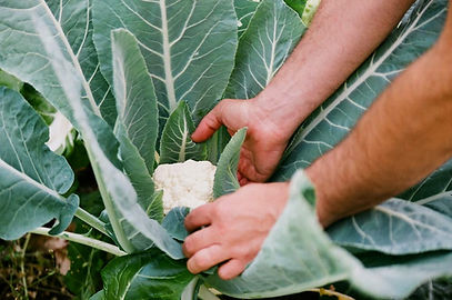 Biohof Bolten Gemüseanbau