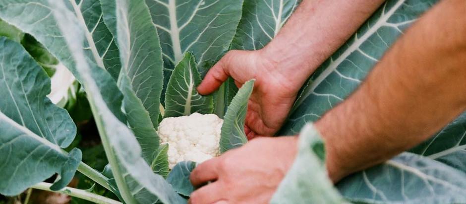 México  jugando un papel relevante en agricultura mundial