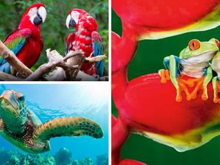 El Edén de la biodiversidad