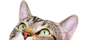 cat looking.png