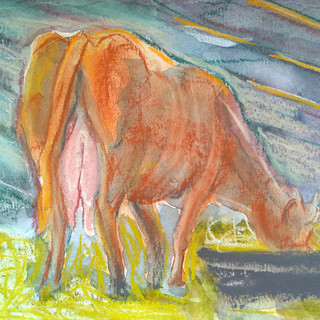 Cow_SC2.jpg