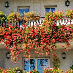 Best Climbing Plants for Balcony