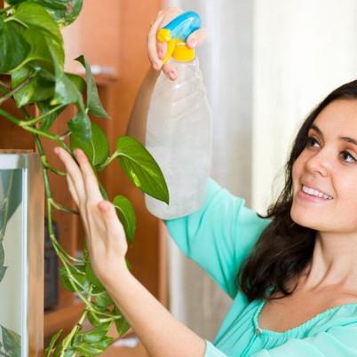 Top 5 Oxygen Producing Indoor plants for 24 Hours