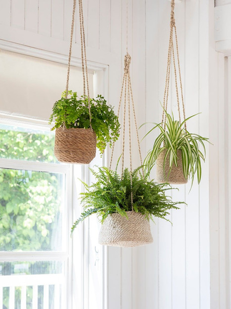 9 Best Hanging Plants for Indoor - Easy to care