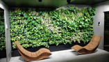 Stabilized Plants - A Green Touch to Decorate your Home