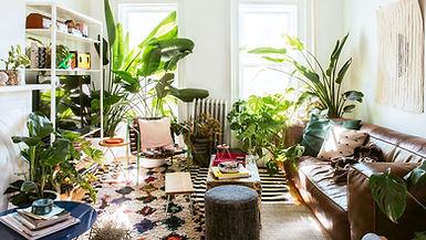 10 Best Indoor Plants for Decoration.jpg