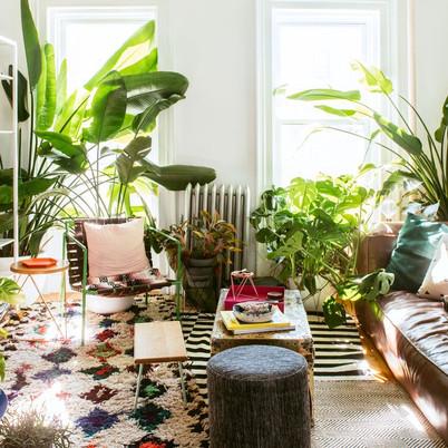 10 Best Indoor Plants for Decoration