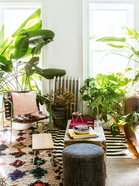 10 Best Indoor Plants for Decoration