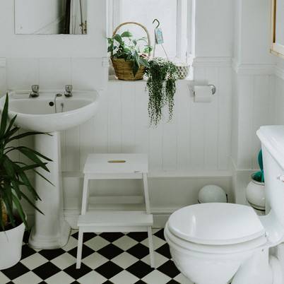 Best Bathroom Plants to Give Jungle Look to your Bathroom